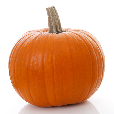 dynia: duży pomarańczowy na białym tle