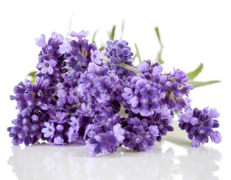 Lavender flowers over white background Stock Photo