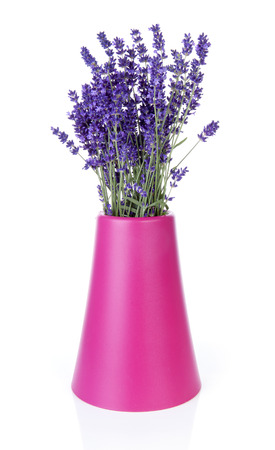 Bouquet of picked lavender in vase over white background Stock Photo