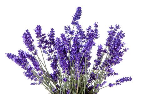Closeup of lavender flowers over white background Foto de archivo