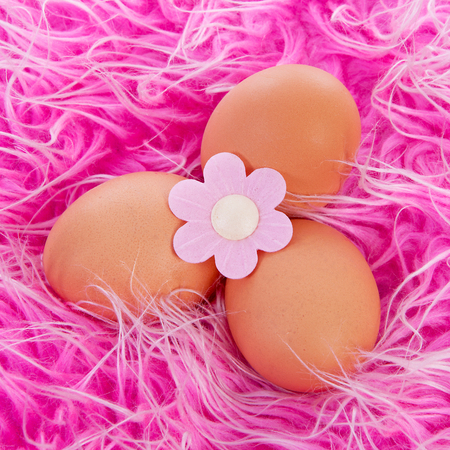 Easter chicken eggs with flower over pink fabric