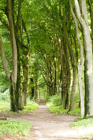 empty path in the forest surrounded by green trees Stock Photo