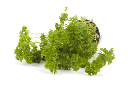 Fresh parsley plant over white background