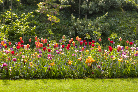 Field with colorful Dutch tulips in the Keukenhof, Lisse Stock Photo
