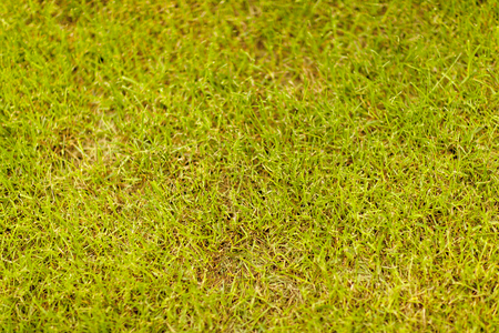 Background of green grass in closeup