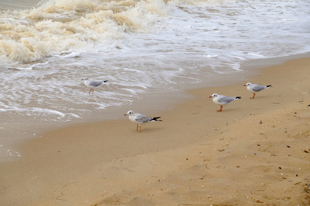 Seagulls by the sea amid waves 스톡 콘텐츠