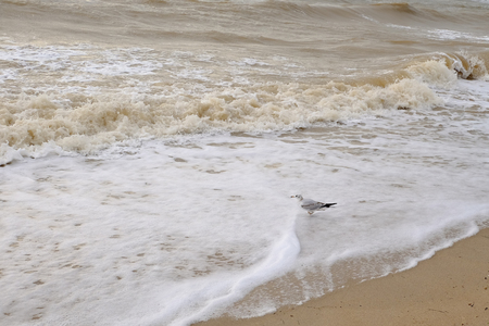 Seagulls by the sea amid waves Stok Fotoğraf