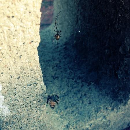 거미는 웹에서 벌을 잡았습니다.