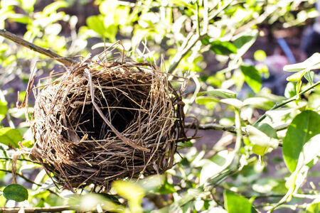 bird nest: bird nest Stock Photo