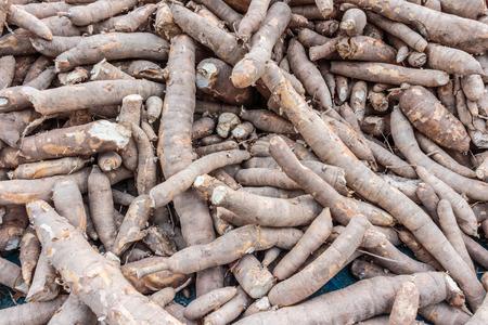 maniok, tapioca, cassave