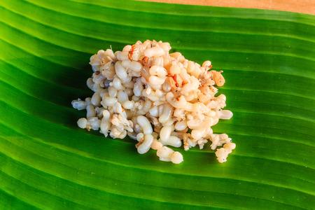 hormiga hoja: Huevos de hormiga roja en hoja de pl�tano Foto de archivo