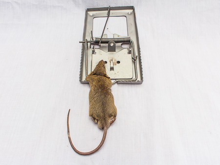 rid: rat and a trap