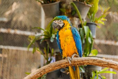 ararauna: Beautiful bird Blue and Gold Macaw