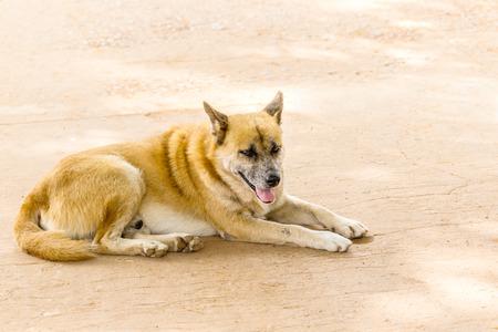 crouching: Brown Dog crouching on the walkway