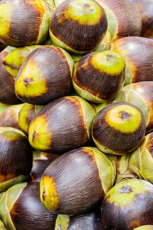 asian palmyra palm: Asian Palmyra palm, Toddy palm, Sugar palm Stock Photo