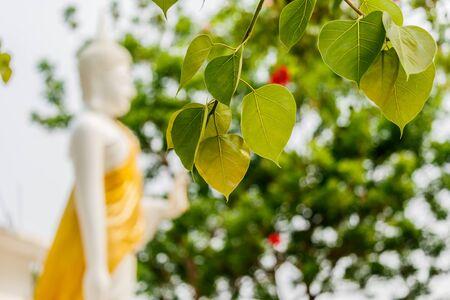 pipal: Bo leafs White Buddha  statue background