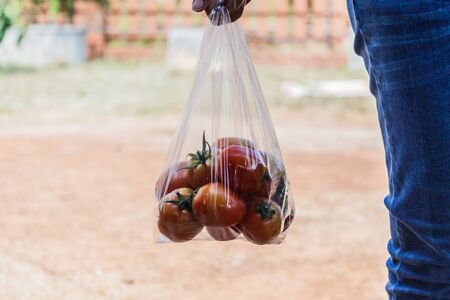 Hand carry bags of tomatoes