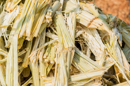 Close up stack bagasse of sugarcane