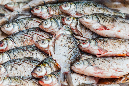 freshwater: Freshwater fish sold in local markets. Thailand Stock Photo