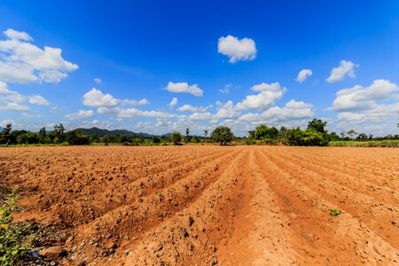 Cassava growing area In the blue sky background