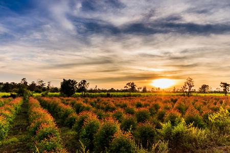 Eucalyptus seedlings in the morning sun Stockfoto