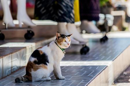 Relaxing cat near fabric store Stockfoto