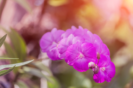 Beautiful pink orchid  with blurred background. Stockfoto