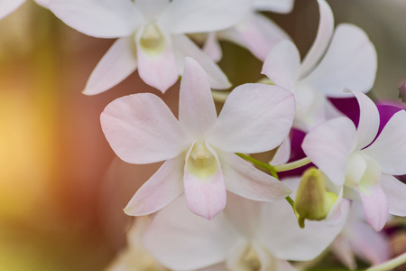 Beautiful white orchid  with blurred background Stockfoto