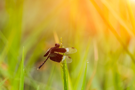 black dragonfly in the green grass and sun light.