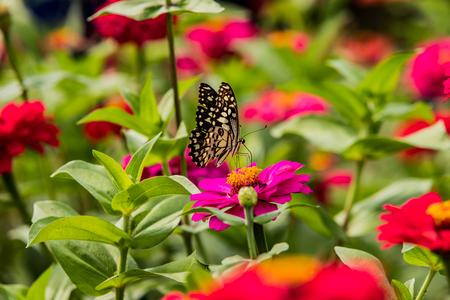 Butterfly caught red flowers in nature background Stockfoto