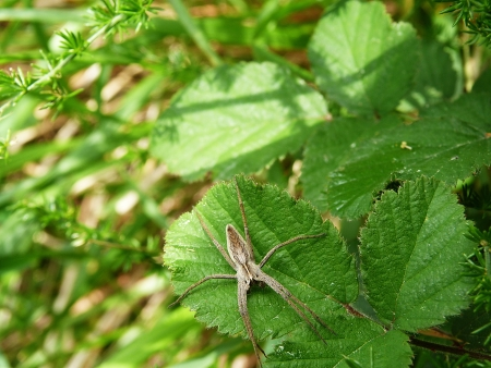 catlike: A spider along the path of love to the Cinque Terre, Liguria, Italy