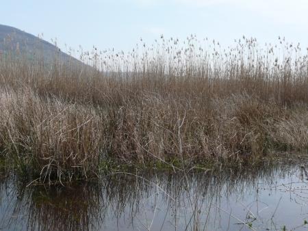 lazio: Bolsena lake, Lazio Italy Stock Photo