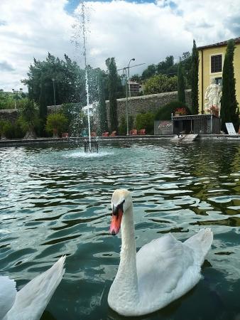 collodi: Pond in the park of Villa Garzoni, Collodi, Tuscany, Italy Editorial