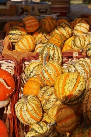 gourds: Ornamental gourds