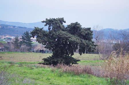 Tree in the park of the Piana of Sesto Fiorentino, Tuscany, Italy