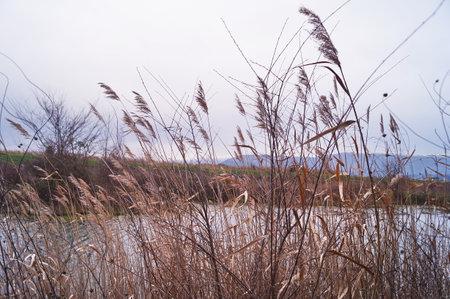 Pond in winter in the Piana park of Sesto Fiorentino, Tuscany, Italy