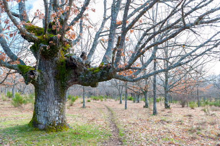 spring scene with foreground and background colorful oak photo