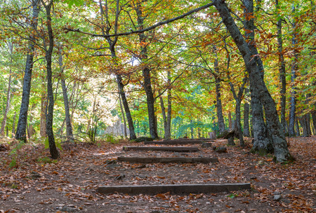 chestnut forest in autumn season with leaves on the ground photo
