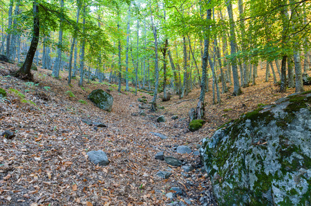 expires: chestnut forest in autumn season with leaves on the ground Stock Photo