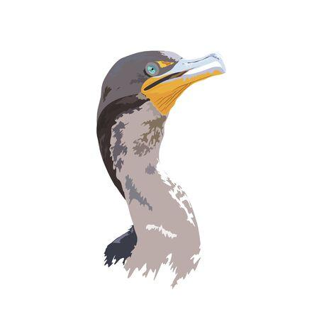 Florida Everglades National Park Cormorant - Detailed Vector Design