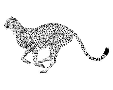 Running African Cheetah - Points, Dots Design, Vector Graphic