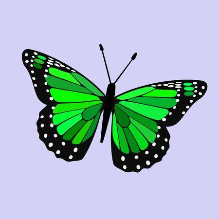 Green Winged Butterfly Vector - Monarch Digital Design Illustration