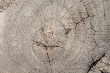 section: Tree cross section texture Stock Photo
