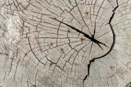 cross section: Tree cross section texture Stock Photo