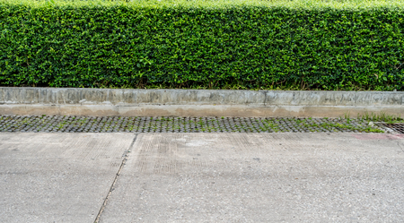 hedge: Green hedge fence with concrete road