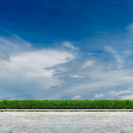 Green hedge fence with concrete road