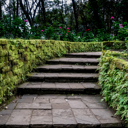Aged stone concrete staircase with moss and fern wall Stock Photo