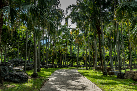 palm: Concrete block pathway with palm trees in the park