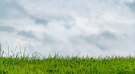 green grass on dark cloud background for product display usage