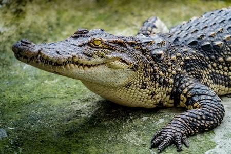 Close-up beeld van Krokodil in de dierentuin